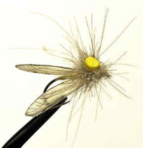 Arron Varga's Crane Fly.