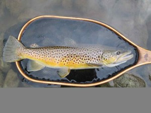 Chris Mouriopoulos TFC Engraved Landing Net.