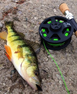 Echo Solo 6 Combo Fly Rod Perch Resized for Web
