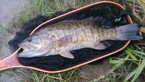 Grand River Smallmouth Bass Chris Mouriopoulos Landing Net Opening Weekend AA
