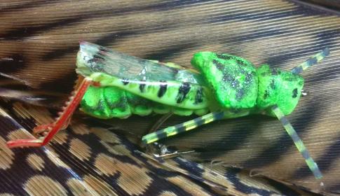 ARM Grasshopper