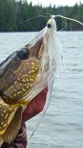 Josh Sault Saint Marie Northern Pike on the fly rod BBB
