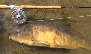Redington Dually Mirror Mirror Carp AA