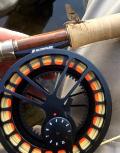 Sage Fly Reel Grand River Brown Drake June 10th 2017BBBB
