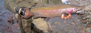 Steelhead North Shore Spirit River Tailing Glove AAA