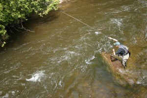 Todd Hi-Sticking on the Credit River with an Indicator