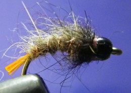nz caddis larva