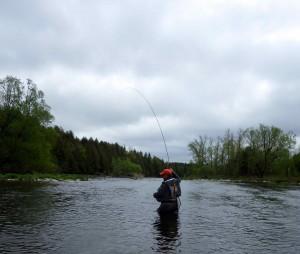 Czech Nymphing Grand River
