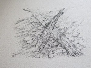 Al Hassall Brookie on Wood INKS, and Seasonable Angler's for Publication 2014 002