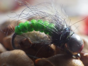 catgut_pupa-caddis_green