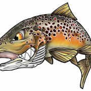 Fins in Frames Brown Trout Sticker AA