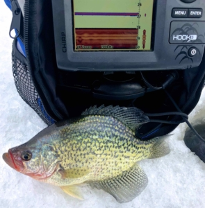 "A ""Dinner Plate"" Crappie while Ice Fishing Belwood Lake ..."